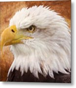Portrait Of A Bald Eagle Metal Print