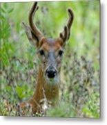 Portriat Of Male Deer Metal Print