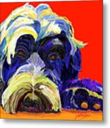 Portugese Water Dog 1 Metal Print