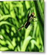 Posing Dragonfly 2 Metal Print