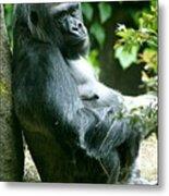 Posing Gorilla Metal Print