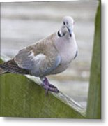 Posing On The Fence Metal Print
