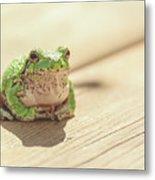 Posing Tree Frog Metal Print