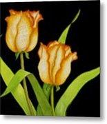 Posing Tulips Metal Print