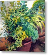 Potted Herbs Metal Print
