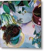 Potted Plants Metal Print by Diane Ursin