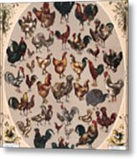 Poultry Of The World Poster Metal Print