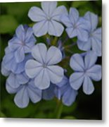 Powder Blue Flowers Metal Print