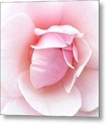 Powder Puff Rose Metal Print