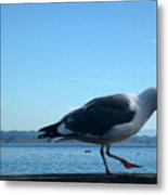 pr 117 - A  Seagull On Thr Fence Metal Print