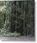pr 137 - Big Trees Metal Print