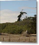 pr 180 - The Leaning Tree Metal Print