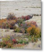 Prairie Beauty Metal Print