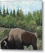 Prairie Bison Metal Print