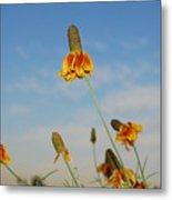 Prairie Cone Flowers Against Blue Sky Horizontal Number Three Metal Print