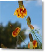 Prairie Cone Flowers Against Blue Sky Vertical Number One Metal Print