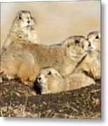 Prairie Dog Family Portrait Metal Print