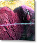 Prairie Icon Not Meant To Be Caged Metal Print