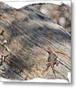 Prairie Lizard _ 1b Metal Print