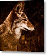 Prairie Wolf Portrait Metal Print