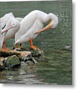 Prayer Of The Pelicans Metal Print