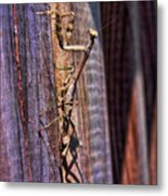 Praying Mantis Metal Print