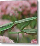 Praying Mantis Metal Print