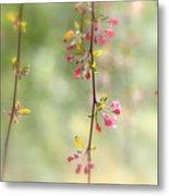 Pre Blossoms Metal Print