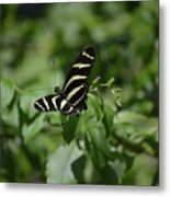 Precious Black And White Zebra Butterfly In The Spring Metal Print