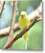 Precious Little Yellow Parakeet In The Wild Metal Print