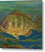 Predatory Fish Metal Print