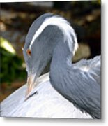 Preening Bird Metal Print