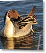 Preening In The Sun Metal Print