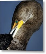 Preening Metal Print by Marty Koch