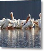 Preening Pelicans Metal Print