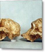 Prehistoric Skulls Metal Print