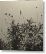 Pressed Daisy Bush Yellow Metal Print