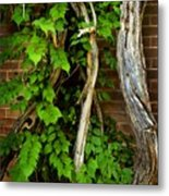 Preston Wall Vine Metal Print