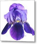 Prettiest Purple Iris Metal Print