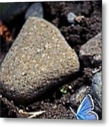 Pretty Butterfly Metal Print
