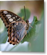 Pretty Butterfly Resting On The Leaf Metal Print
