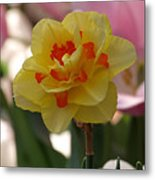 Pretty Daffodil Metal Print
