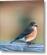 Pretty In Blue Metal Print