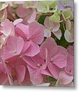 Pretty In Pink Hydrangeas Metal Print