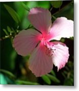 Pretty In Pink Photograph Metal Print