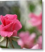 Pretty In Pink Rose Metal Print