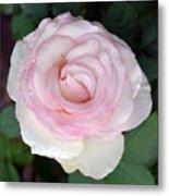 Pretty In Pink Rose Metal Print
