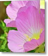 Pretty In Pink Two Metal Print