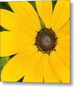Pretty In Yellow Metal Print