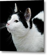 Pretty Kitty Cat 2 Metal Print
